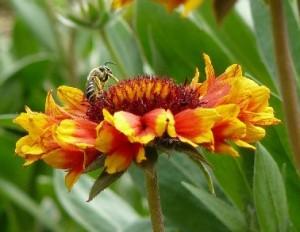 Пчеларство Плевен 2014 програма