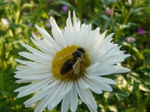 Собственици на пчели ще трябва да ги приберат във връзка с растителнозащитни мероприятия
