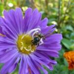 Учредително събрание на Обединен български пчеларски съюз