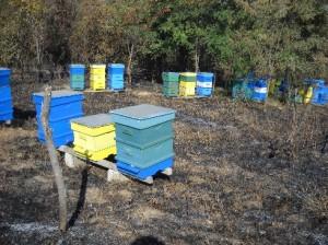 Грижи за пчелните семейства след медосбора – част 2