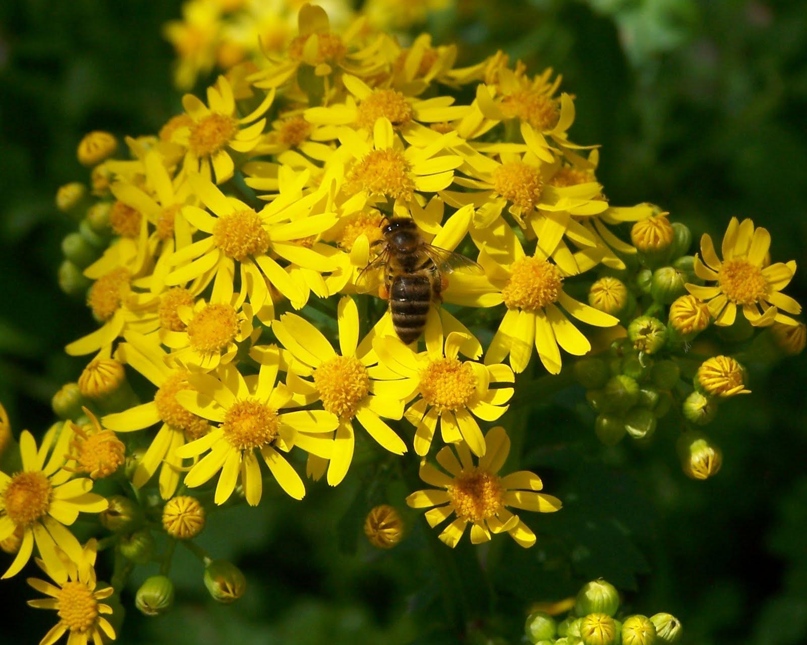 bee-conference-honey-med-pcheli-pchelari-pchelarstvo