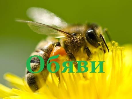 bee-obqvi-pcheli-pchelarstvo-pic-pics-pchela-med-medyt-pchelin-honey-21