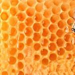 Продавам пчелен мед на едро и длебно с преобладаване на магарешки бодил 6 тенекии по 6.50 за кг. Меда е с отлични вкусови качества.Има 20 тенекии слънчоглед на 6 лв. за кг.