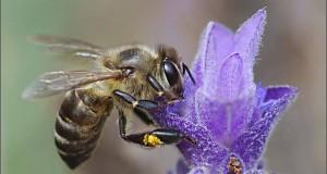 Пчеларски празник в чест на Св. Харалампий