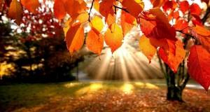 Есенни грижи за пчелните семейства и подготовка за зимуване # Част 2