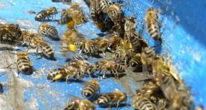 """Фонд """"Земеделие"""" организира  информационни дни за пчеларите"""