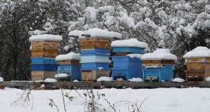 Грижи за пчелните семейства през зимата – Част 2