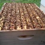 продавам майки и отводки по пчеларската програма