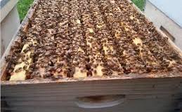 Продавам 8 тона пчелен мед в нови тенекии