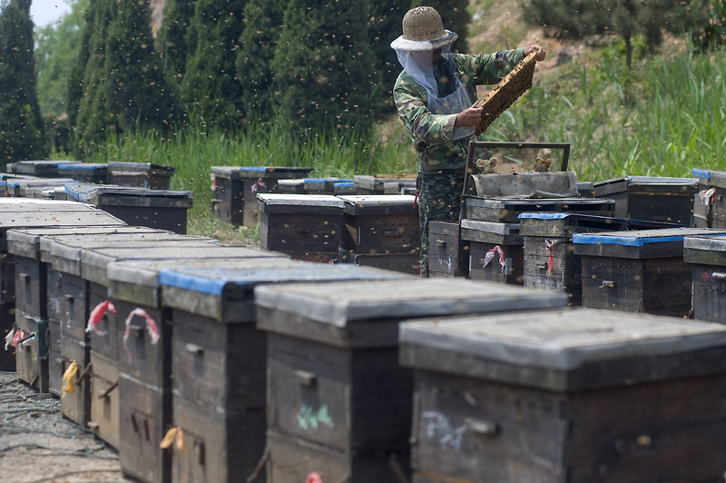Пчеларството в Китай (Снимки)