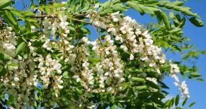 Изпадат ли пчелите през зимата в състояние на анабиоза и от какво зависи успешното презимуване?