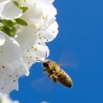 Грижи за пчелите през месец април