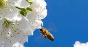 Как да повишим добивите от пчеларство когато цената на меда пада?