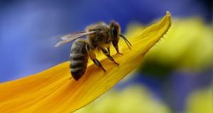 Продавам 50 тенекии пчелен мед пролетен от 2017 год.медът е смесица рапица и акация и полски цветя,приблизително около 1250килограма