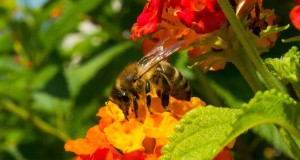 пчелите през месец Август