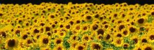 Ще получат ли пчеларите субсидии и пари за опрашването?